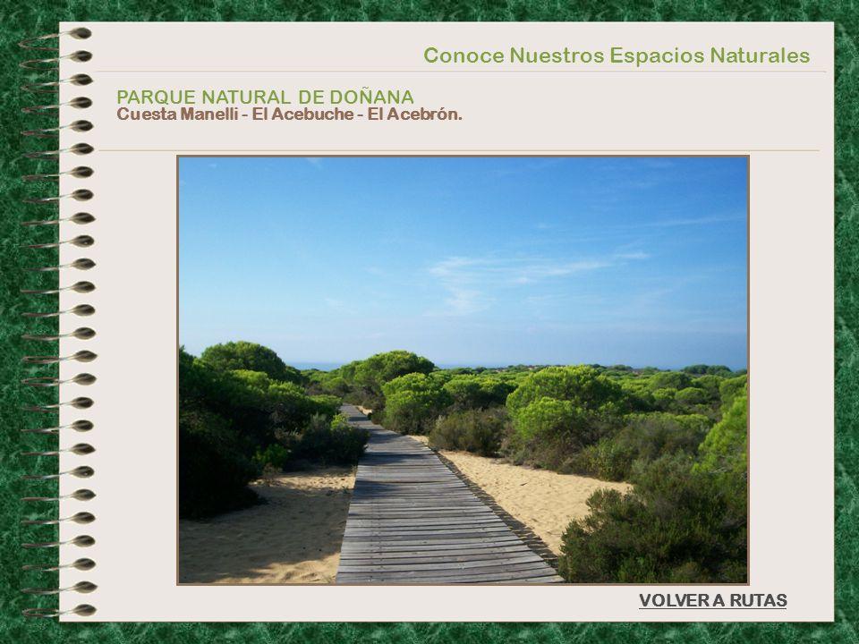 Conoce Nuestros Espacios Naturales PARQUE NATURAL DE DOÑANA Cuesta Manelli - El Acebuche - El Acebrón. VOLVER A RUTAS
