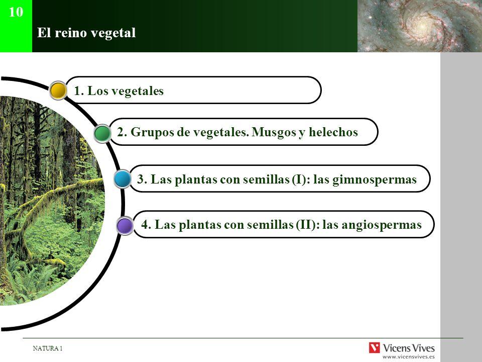 NATURA 1 El reino vegetal 4. Las plantas con semillas (II): las angiospermas 3. Las plantas con semillas (I): las gimnospermas 2. Grupos de vegetales.
