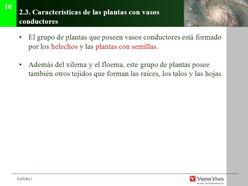 NATURA 1 2.3. Características de las plantas con vasos conductores El grupo de plantas que poseen vasos conductores está formado por los helechos y la