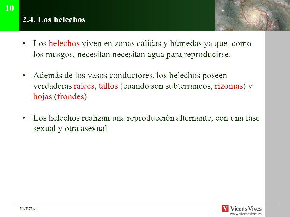 NATURA 1 2.4. Los helechos Los helechos viven en zonas cálidas y húmedas ya que, como los musgos, necesitan necesitan agua para reproducirse. Además d