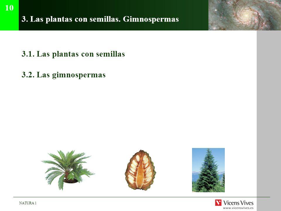 NATURA 1 3. Las plantas con semillas. Gimnospermas 3.1. Las plantas con semillas 3.2. Las gimnospermas 10