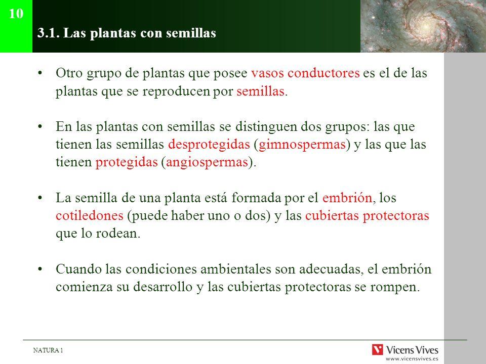 NATURA 1 3.1. Las plantas con semillas Otro grupo de plantas que posee vasos conductores es el de las plantas que se reproducen por semillas. En las p