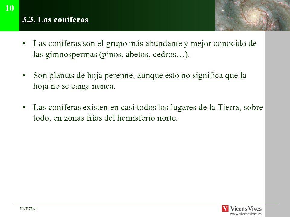 NATURA 1 3.3. Las coníferas Las coníferas son el grupo más abundante y mejor conocido de las gimnospermas (pinos, abetos, cedros…). Son plantas de hoj