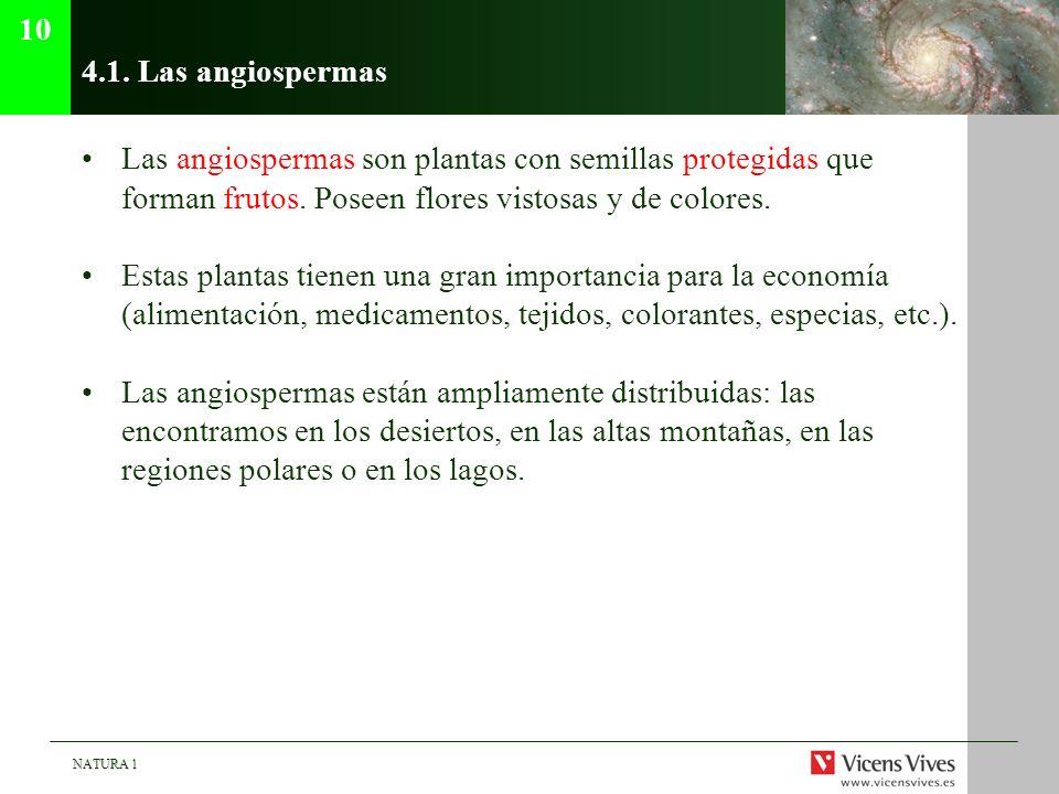 NATURA 1 4.1. Las angiospermas Las angiospermas son plantas con semillas protegidas que forman frutos. Poseen flores vistosas y de colores. Estas plan