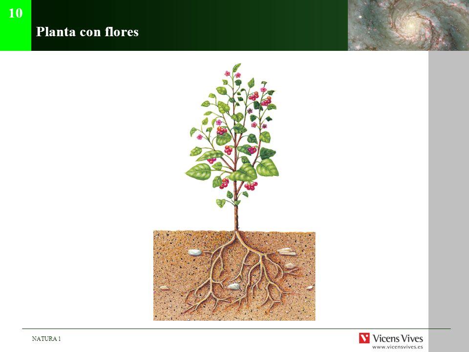 NATURA 1 Planta con flores 10