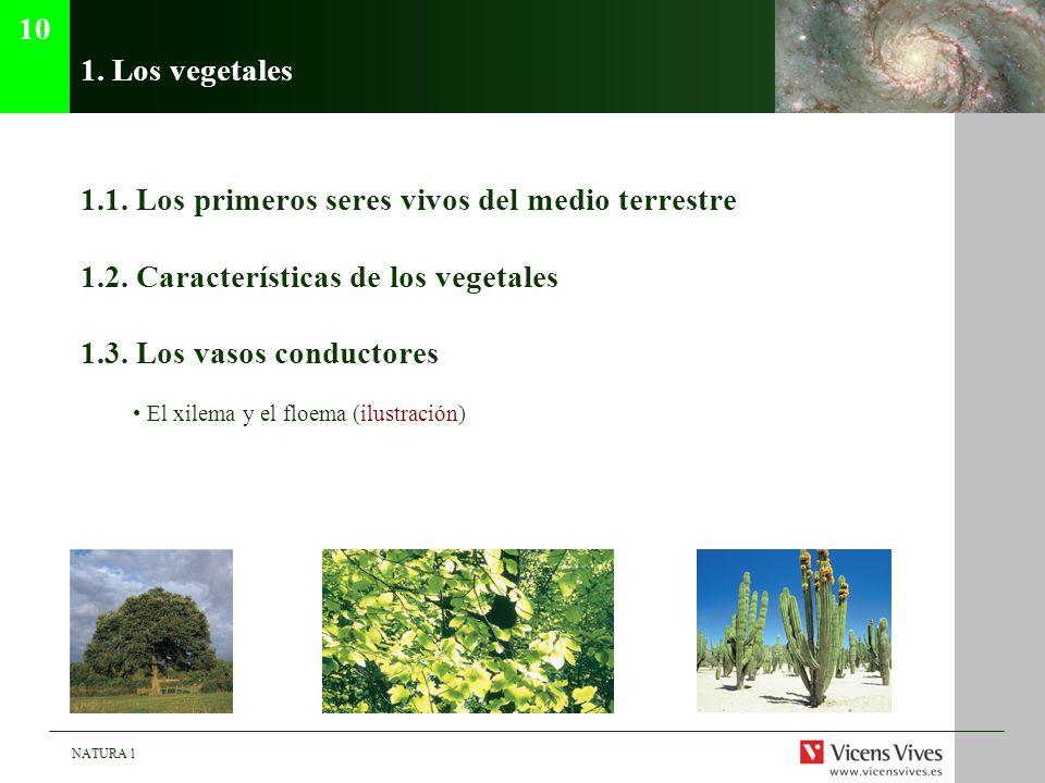 NATURA 1 1. Los vegetales 1.1. Los primeros seres vivos del medio terrestre 1.2. Características de los vegetales 1.3. Los vasos conductores El xilema