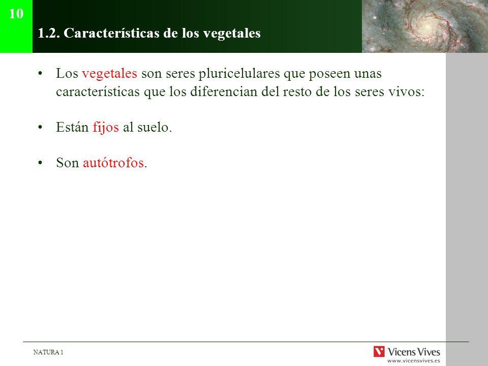 NATURA 1 1.2. Características de los vegetales Los vegetales son seres pluricelulares que poseen unas características que los diferencian del resto de