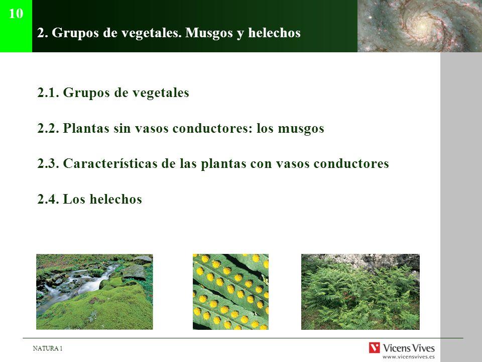 NATURA 1 2. Grupos de vegetales. Musgos y helechos 2.1. Grupos de vegetales 2.2. Plantas sin vasos conductores: los musgos 2.3. Características de las