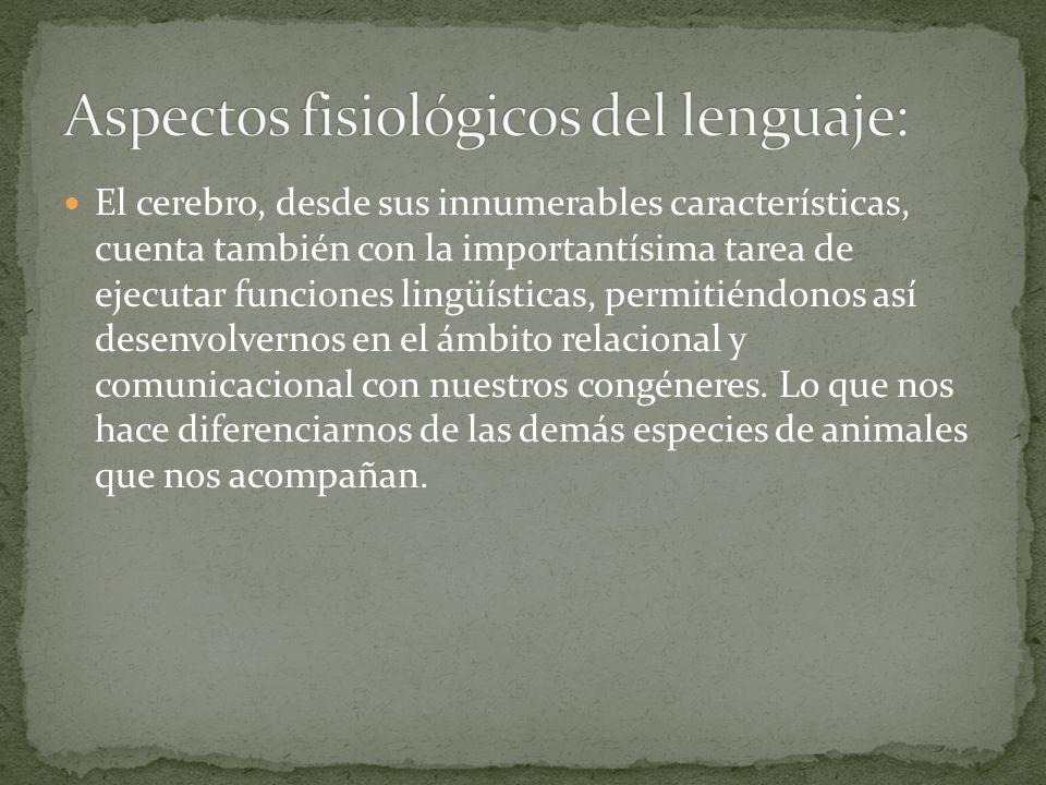 El cerebro, desde sus innumerables características, cuenta también con la importantísima tarea de ejecutar funciones lingüísticas, permitiéndonos así