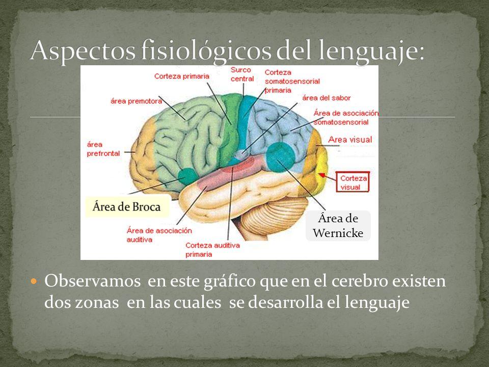 Observamos en este gráfico que en el cerebro existen dos zonas en las cuales se desarrolla el lenguaje Área de Wernicke