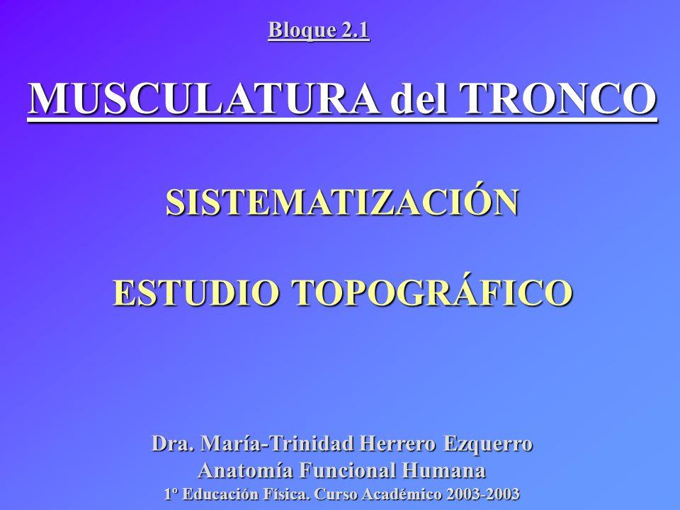 MUSCULATURA del TRONCO SISTEMATIZACIÓN ESTUDIO TOPOGRÁFICO Dra. María-Trinidad Herrero Ezquerro Anatomía Funcional Humana 1º Educación Física. Curso A