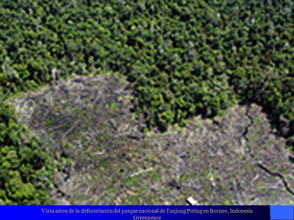 Vista aérea de la deforestación del parque nacional de Tanjung Puting en Borneo, Indonesia Greenpeace