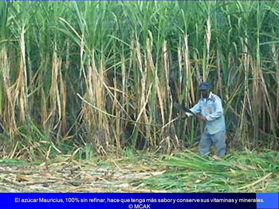 El azúcar Mauricius, 100% sin refinar, hace que tenga más sabor y conserve sus vitaminas y minerales. © MCAK