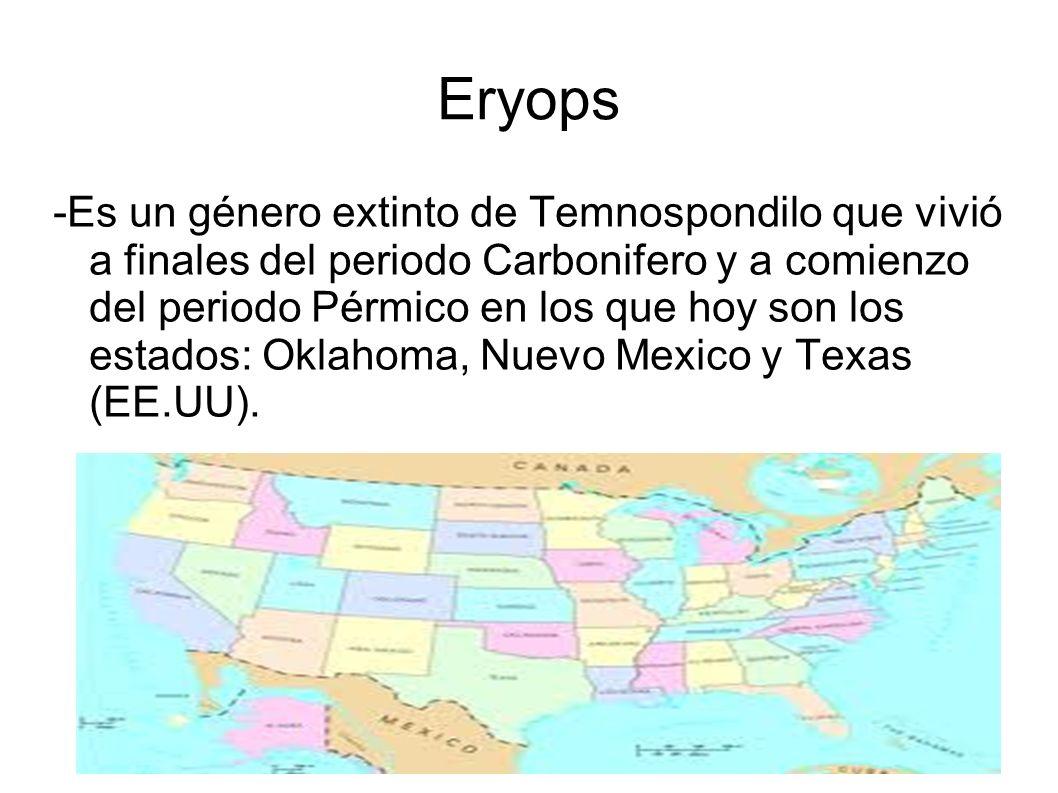 Eryops -Es un género extinto de Temnospondilo que vivió a finales del periodo Carbonifero y a comienzo del periodo Pérmico en los que hoy son los esta