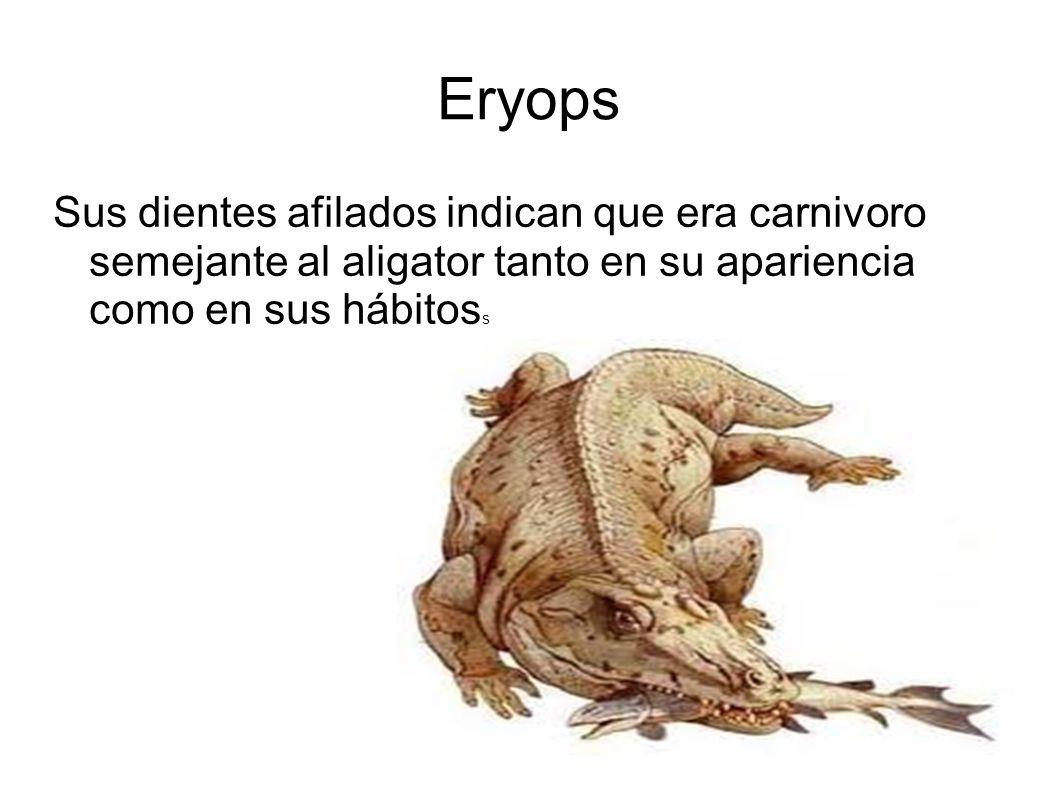 Eryops Sus dientes afilados indican que era carnivoro semejante al aligator tanto en su apariencia como en sus hábitos s