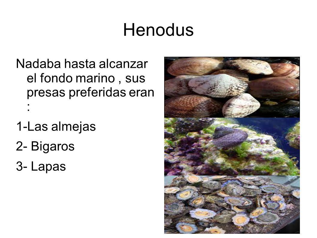 Henodus Nadaba hasta alcanzar el fondo marino, sus presas preferidas eran : 1-Las almejas 2- Bigaros 3- Lapas