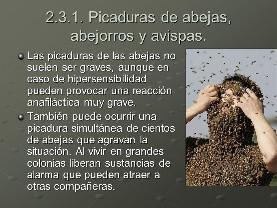 2.3.1. Picaduras de abejas, abejorros y avispas. Las picaduras de las abejas no suelen ser graves, aunque en caso de hipersensibilidad pueden provocar