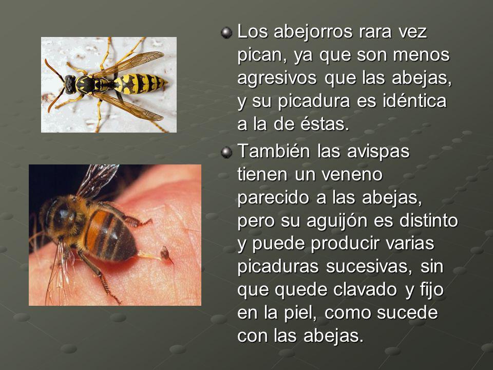 Los abejorros rara vez pican, ya que son menos agresivos que las abejas, y su picadura es idéntica a la de éstas. También las avispas tienen un veneno