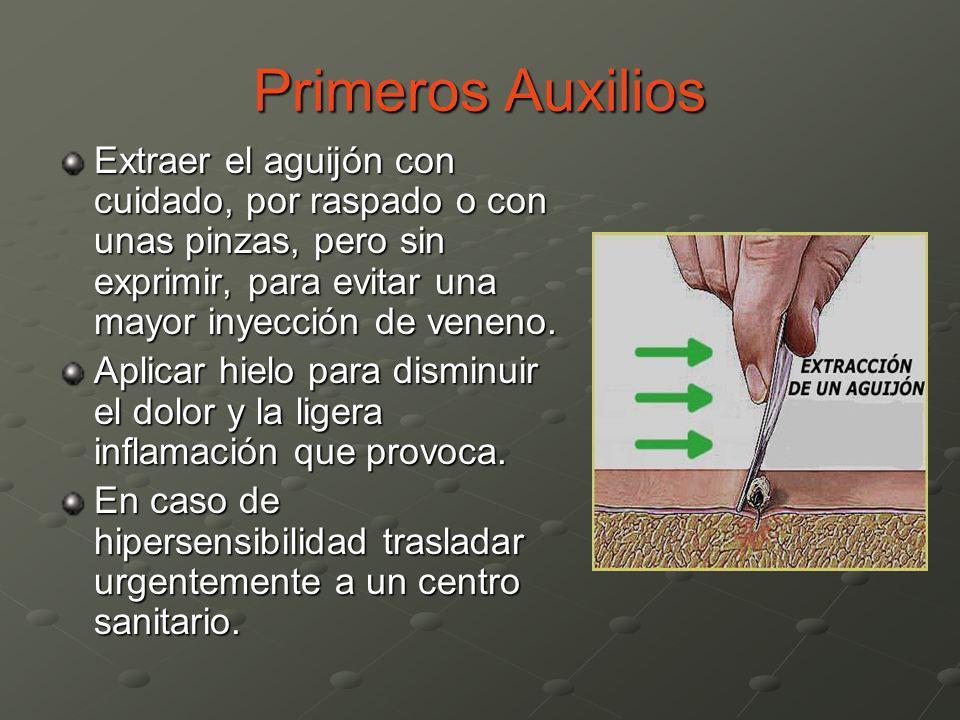 Primeros Auxilios Extraer el aguijón con cuidado, por raspado o con unas pinzas, pero sin exprimir, para evitar una mayor inyección de veneno. Aplicar
