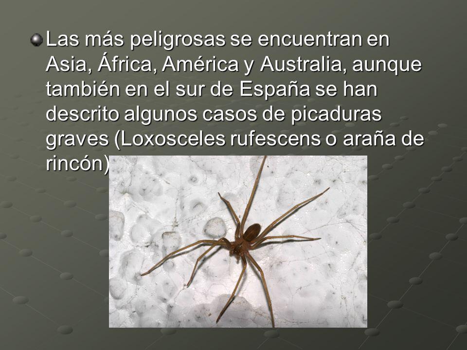 Las más peligrosas se encuentran en Asia, África, América y Australia, aunque también en el sur de España se han descrito algunos casos de picaduras g