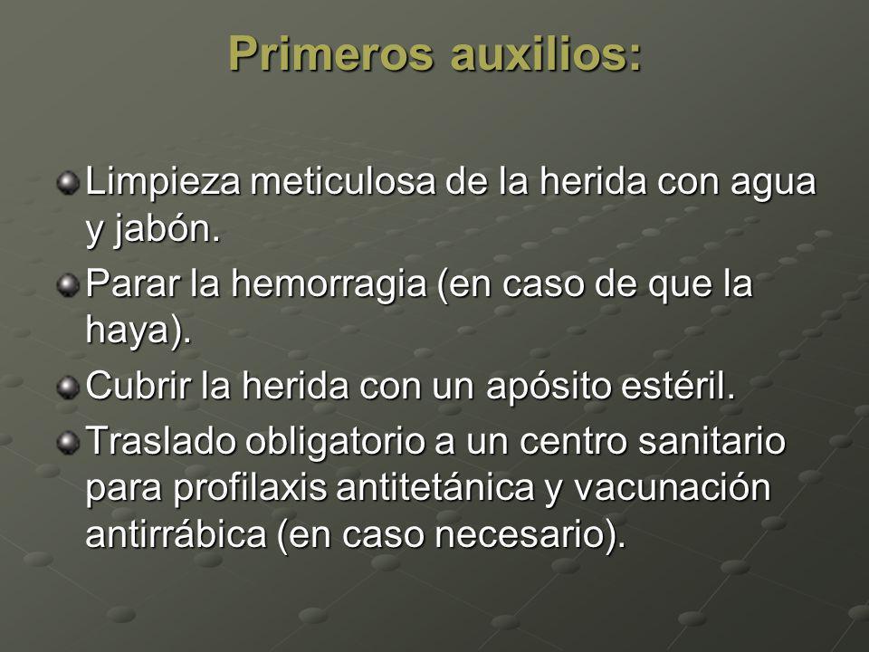 Si es posible, hay que comprobar si el animal que ha mordido está contaminado por el virus, capturándolo y llevándolo a un veterinario.