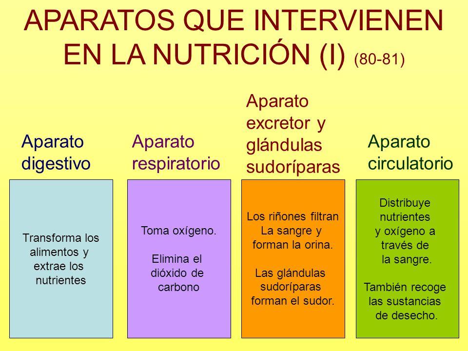 APARATOS QUE INTERVIENEN EN LA NUTRICIÓN (I) (80-81) Aparato digestivo Aparato respiratorio Aparato excretor y glándulas sudoríparas Aparato circulato