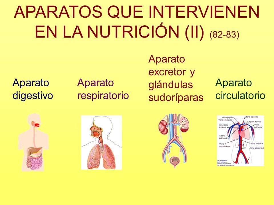 APARATOS QUE INTERVIENEN EN LA NUTRICIÓN (II) (82-83) Aparato digestivo Aparato respiratorio Aparato excretor y glándulas sudoríparas Aparato circulat