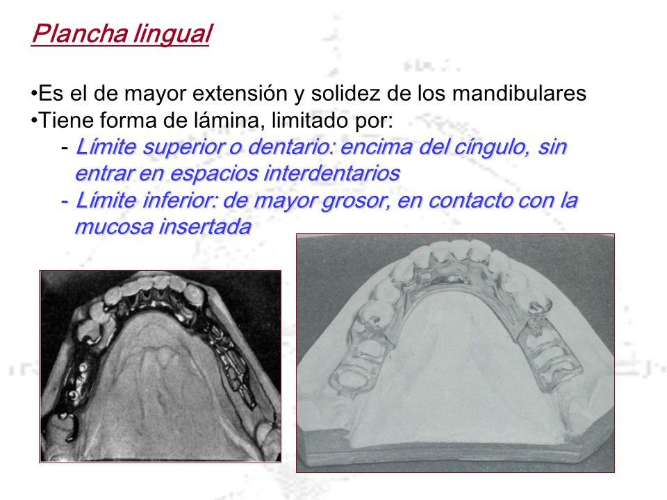 Plancha lingual Es el de mayor extensión y solidez de los mandibulares Tiene forma de lámina, limitado por: Límite superior o dentario: encima del cín