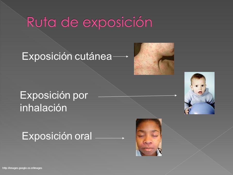 Exposición por inhalación Exposición oral Exposición cutánea http://images.google.co.cr/images