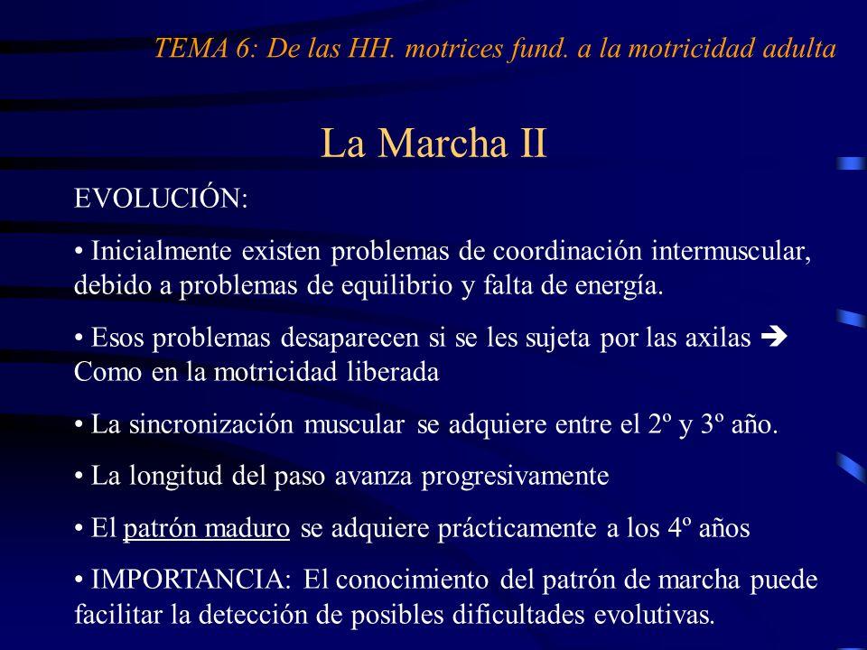La Marcha II EVOLUCIÓN: Inicialmente existen problemas de coordinación intermuscular, debido a problemas de equilibrio y falta de energía. Esos proble