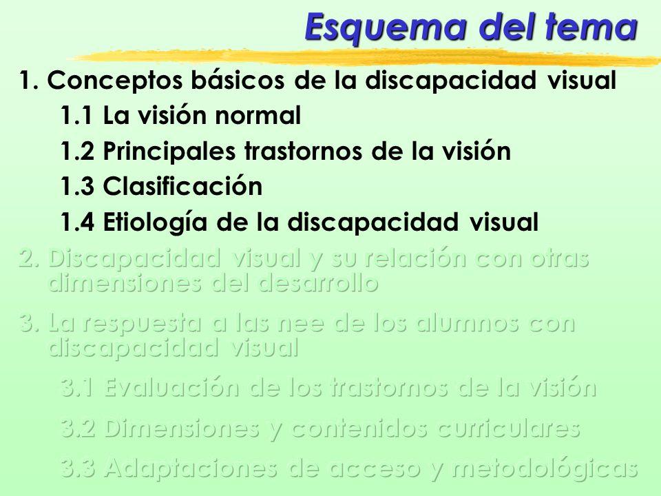 1.1 La visión normal ESTRUCTURAS IMPLICADAS Globo ocular IMAGEN