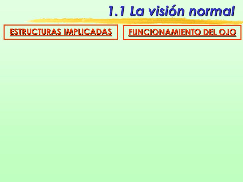 1.1 La visión normal ESTRUCTURAS IMPLICADAS Vías ópticas Estructuras cerebrales Cuerpos Geniculados ópticos Quiasma óptico En el ojo Corteza Visual Ocipital Núcleo Motor Ocular Tres fascículos Segmento retro-bulbar Cintillas ópticas