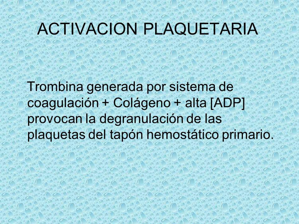 ACTIVACION PLAQUETARIA Trombina generada por sistema de coagulación + Colágeno + alta [ADP] provocan la degranulación de las plaquetas del tapón hemos