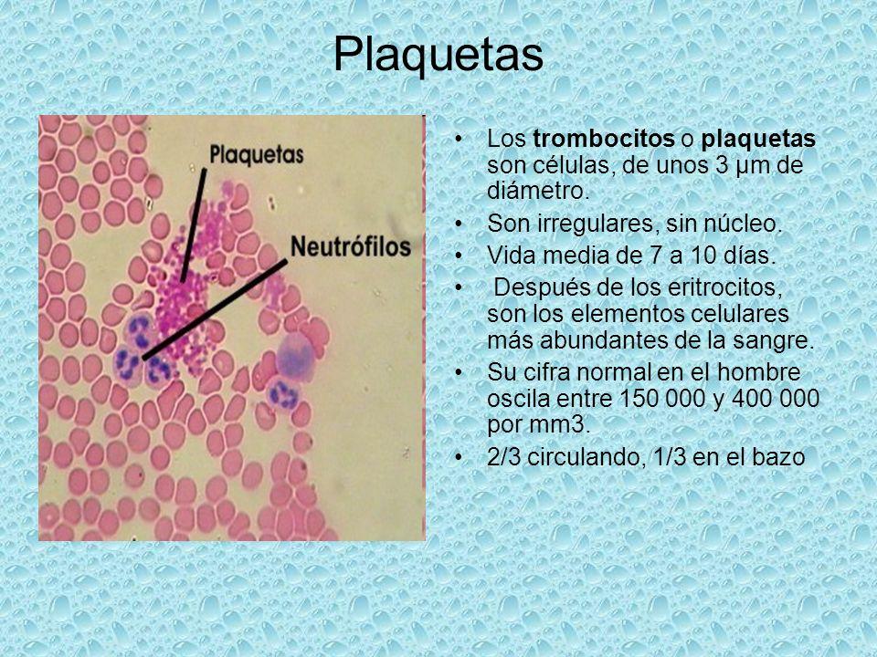 Los trombocitos o plaquetas son células, de unos 3 µm de diámetro. Son irregulares, sin núcleo. Vida media de 7 a 10 días. Después de los eritrocitos,