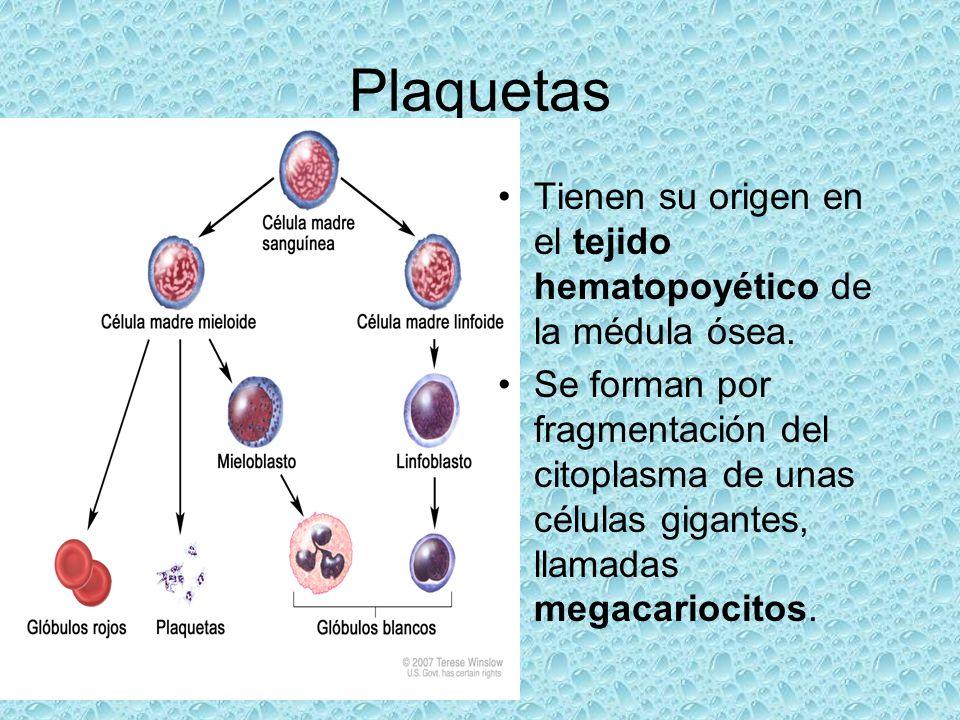 Tienen su origen en el tejido hematopoyético de la médula ósea. Se forman por fragmentación del citoplasma de unas células gigantes, llamadas megacari