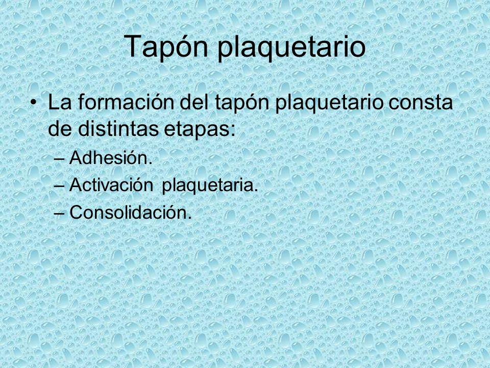 Tapón plaquetario La formación del tapón plaquetario consta de distintas etapas: –Adhesión. –Activación plaquetaria. –Consolidación.