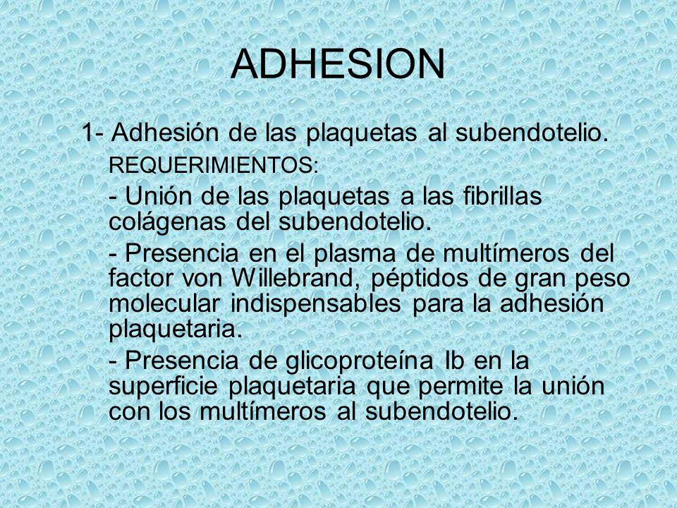 ADHESION 1- Adhesión de las plaquetas al subendotelio. REQUERIMIENTOS: - Unión de las plaquetas a las fibrillas colágenas del subendotelio. - Presenci