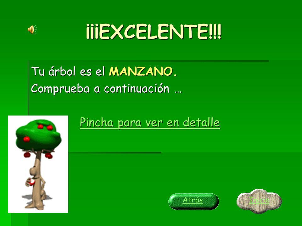 ¡¡¡EXCELENTE!!! Tu árbol es el CHOPO AMERICANO. Comprueba a continuación … Pincha para ver en detalle Pincha para ver en detalle Inicio Atrás