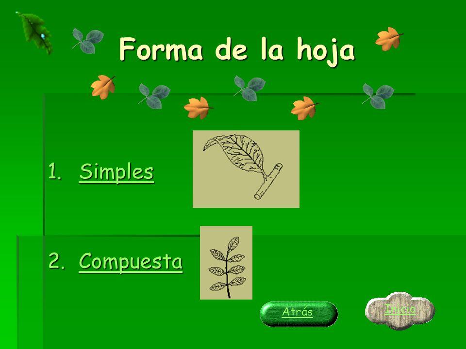 Forma de la hoja 1.Simples Simples 2.Compuesta Compuesta Inicio Atrás