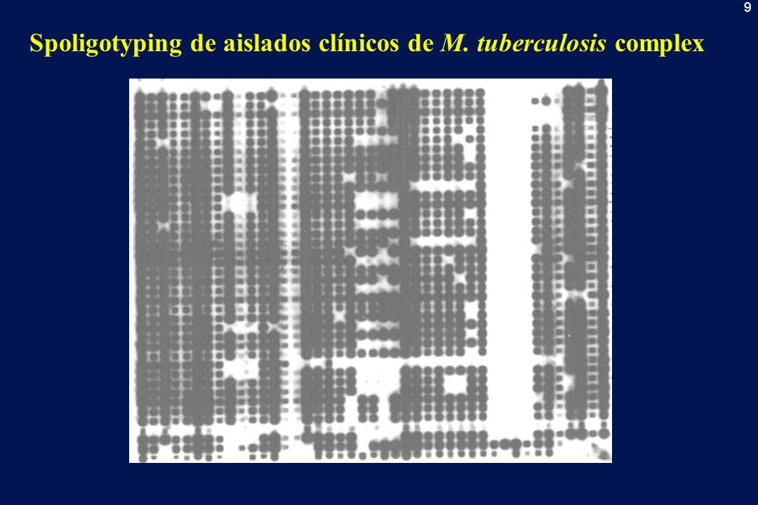 9 Spoligotyping de aislados clínicos de M. tuberculosis complex
