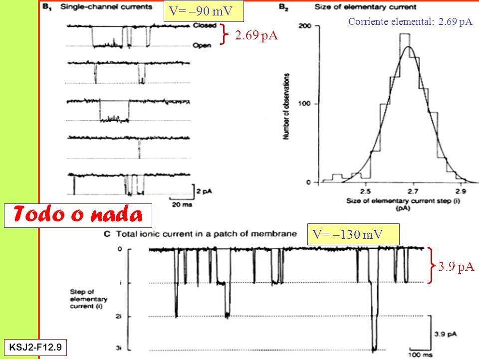 Single-channel current KSJ-F11.9 El potencial inverso de la corriente de un canal es igual al de la total Potencial inverso