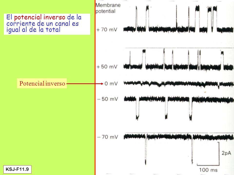 Eccles et al: Medición del ISPS de neuronas motoras medulares, a diferentes valores del potencial de membrana inicial.
