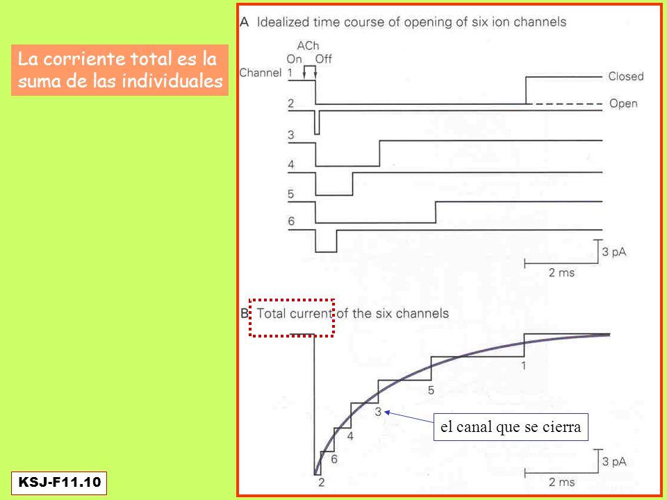 Un ión (especie p) produce una corriente: Tanto el Cl- como el K+ tienen potenciales de equilibrio más negativos que el V de reposo.