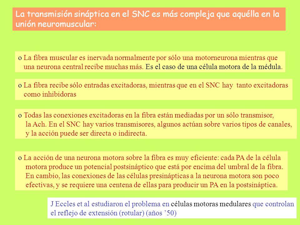 La componente NMDA da una contribución tardía