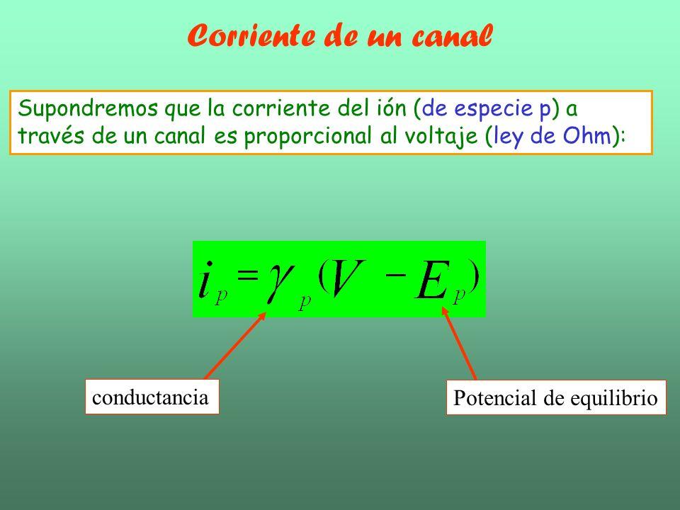 Supondremos que la corriente del ión (de especie p) a través de un canal es proporcional al voltaje (ley de Ohm): Potencial de equilibrio conductancia