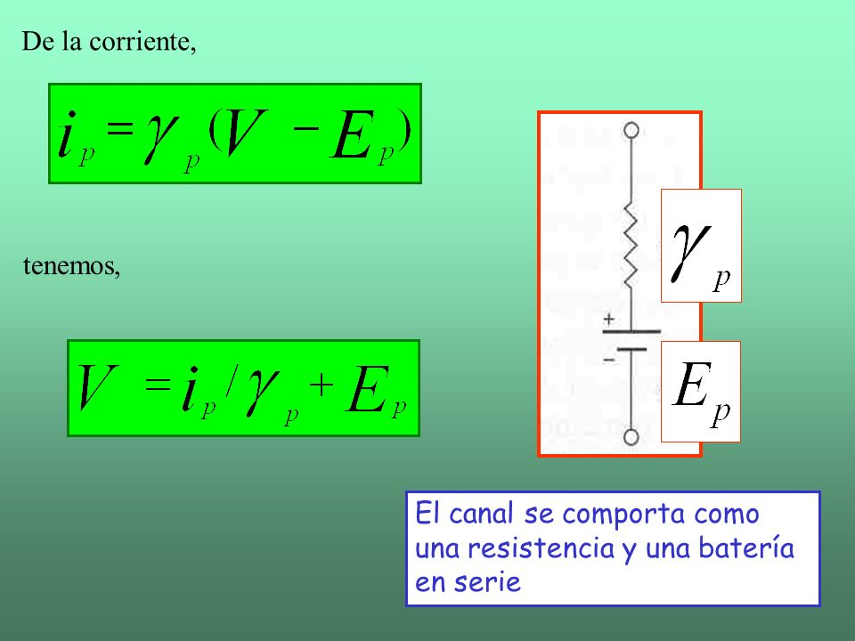 La corriente total de iones de una especie dada, depende del número de canales en la membrana por los que pueda pasar.