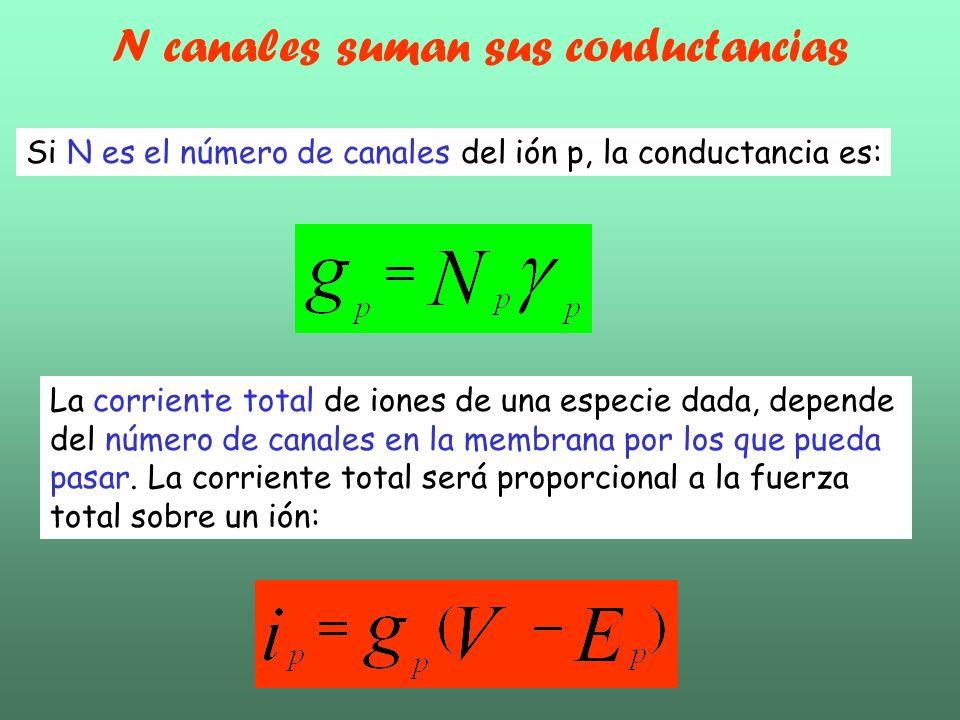 La corriente total de iones de una especie dada, depende del número de canales en la membrana por los que pueda pasar. La corriente total será proporc