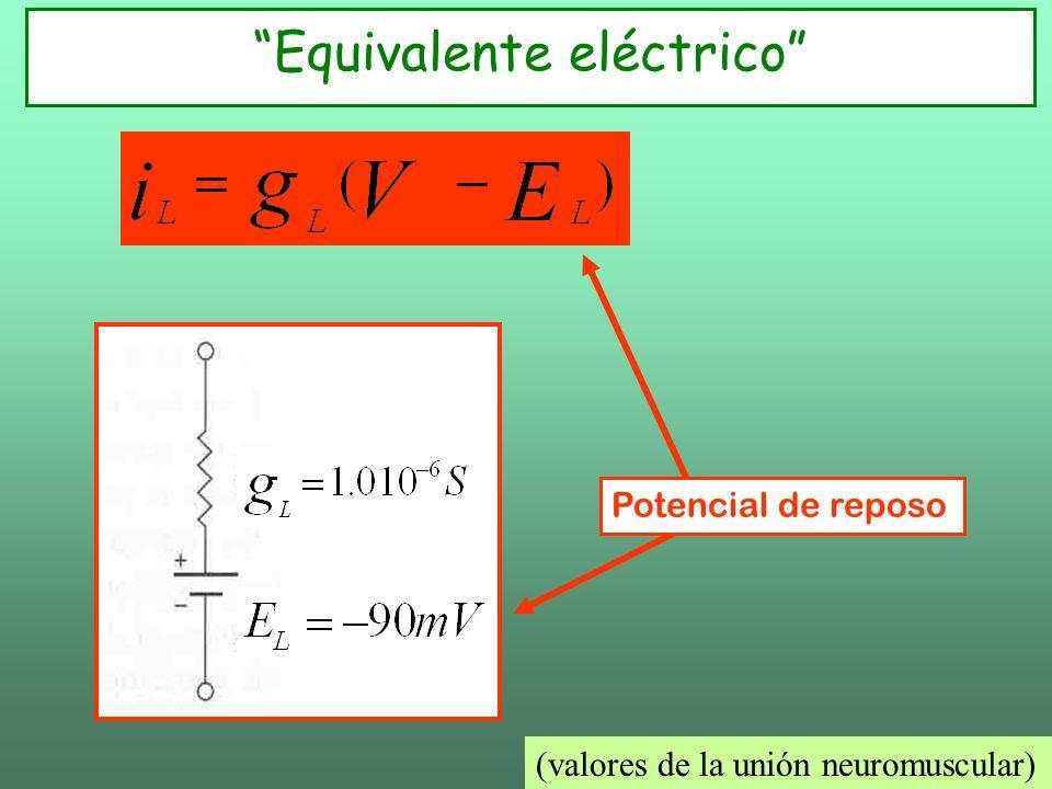Equivalente eléctrico Potencial de reposo (valores de la unión neuromuscular)