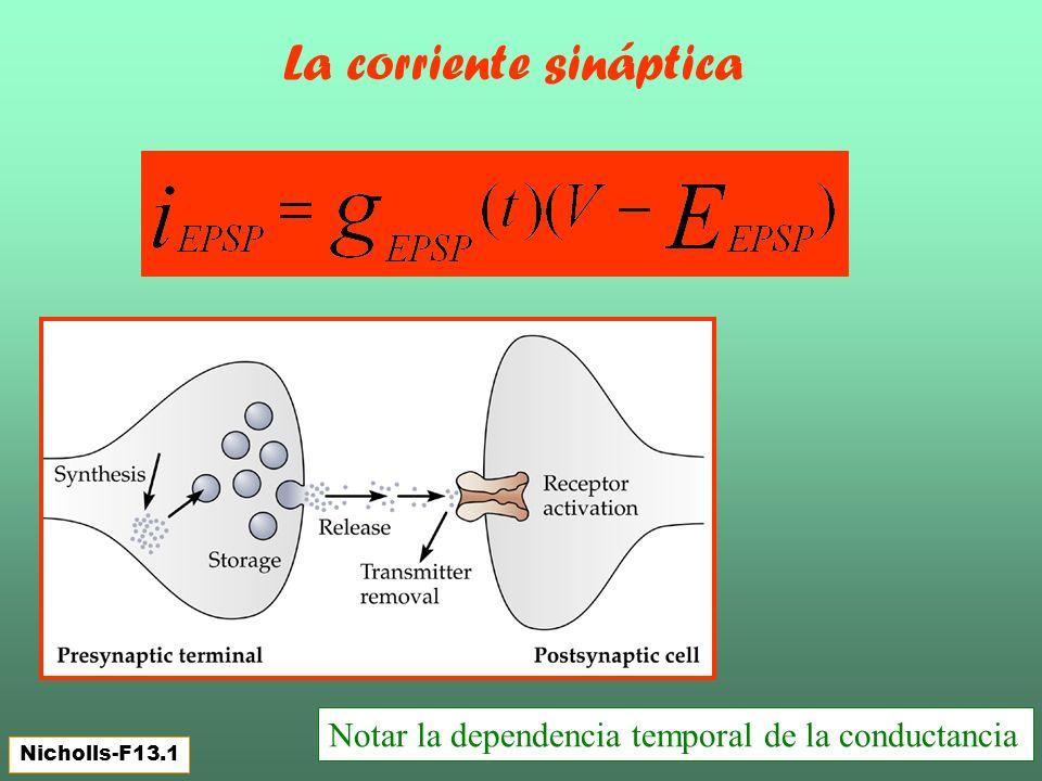 La corriente sináptica Nicholls-F13.1 Notar la dependencia temporal de la conductancia