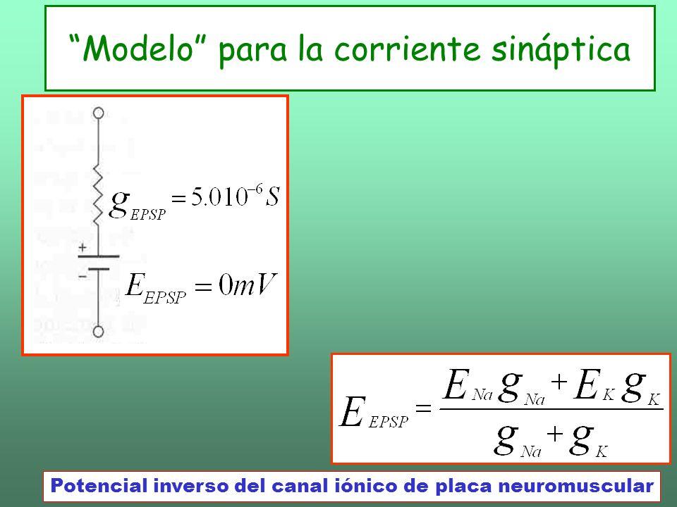 Modelo para la corriente sináptica Potencial inverso del canal iónico de placa neuromuscular